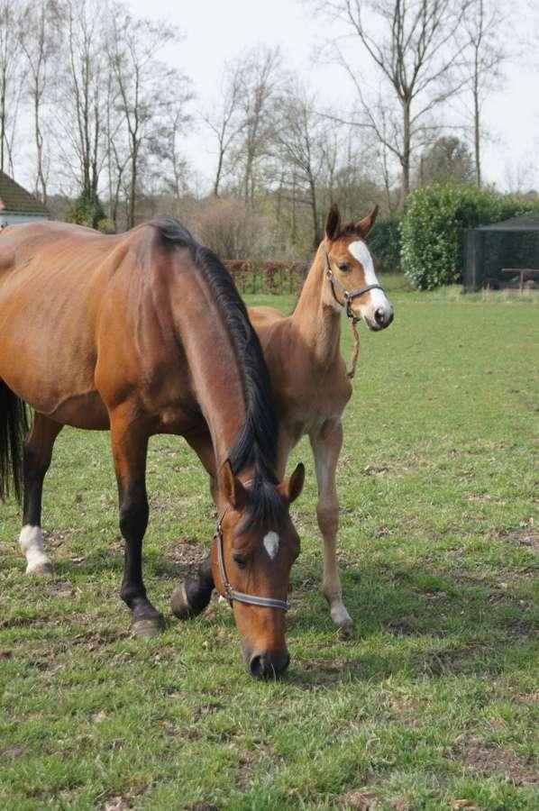 paard-met-veulen