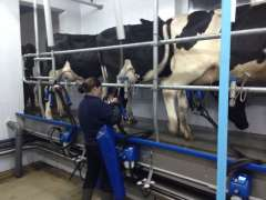 Milking the cows (short movie)